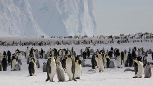 Wielkie liczenie pingwinów. Dwukrotny przyrost w trzy lata