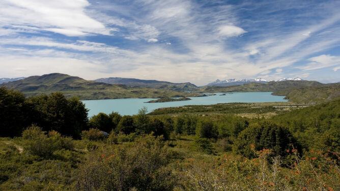 Milion drzew dla Patagonii. Ratują rezerwat w Chile