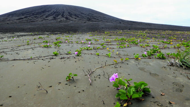 Wyspa, której nie było. <br />Pokryta roślinnością i dziwnym błotem