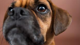 Psy i naczelne wyczuwają pole magnetyczne Ziemi