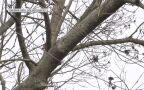 Powalone drzewo na linię energetyczną w Świdniku